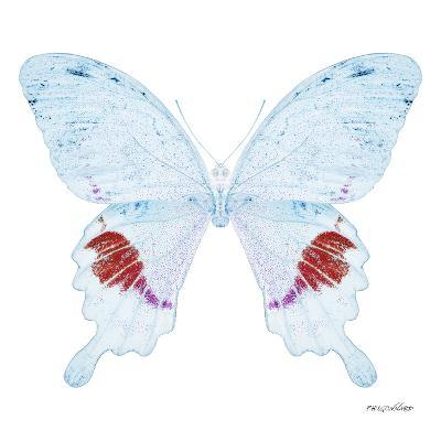 Miss Butterfly Hermosanus Sq - X-Ray White Edition-Philippe Hugonnard-Photographic Print