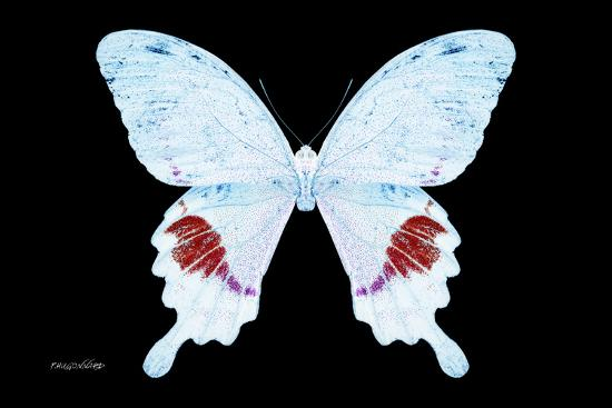 Miss Butterfly Hermosanus - X-Ray Black Edition-Philippe Hugonnard-Photographic Print