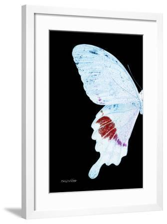 Miss Butterfly Hermosanus - X-Ray Left Black Edition-Philippe Hugonnard-Framed Photographic Print