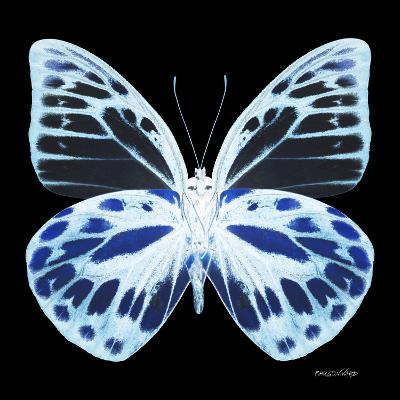 Miss Butterfly Prioneris Sq - X-Ray Black Edition-Philippe Hugonnard-Photographic Print
