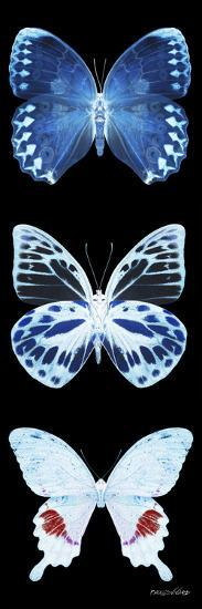 Miss Butterfly X-Ray Black Pano II-Philippe Hugonnard-Photographic Print