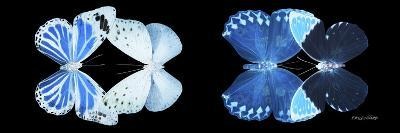 Miss Butterfly X-Ray Duo Black Pano X-Philippe Hugonnard-Photographic Print