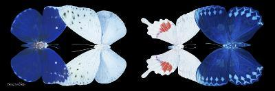Miss Butterfly X-Ray Duo Black Pano XII-Philippe Hugonnard-Photographic Print