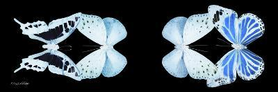 Miss Butterfly X-Ray Duo Black Pano XIII-Philippe Hugonnard-Photographic Print