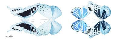Miss Butterfly X-Ray Duo White Pano II-Philippe Hugonnard-Photographic Print