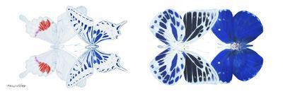 https://imgc.artprintimages.com/img/print/miss-butterfly-x-ray-duo-white-pano-v_u-l-q19na340.jpg?p=0