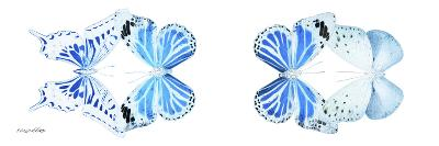 Miss Butterfly X-Ray Duo White Pano VI-Philippe Hugonnard-Photographic Print