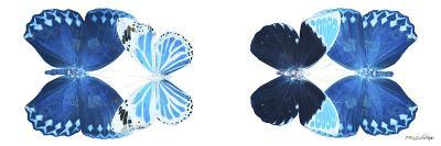 Miss Butterfly X-Ray Duo White Pano VII-Philippe Hugonnard-Photographic Print
