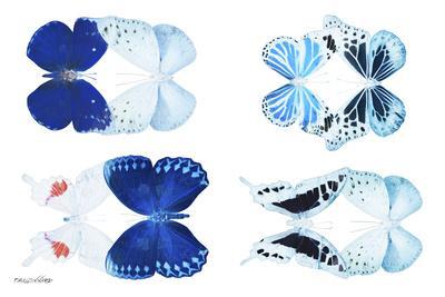 https://imgc.artprintimages.com/img/print/miss-butterfly-x-ray-duo-white-v_u-l-q19nahd0.jpg?p=0
