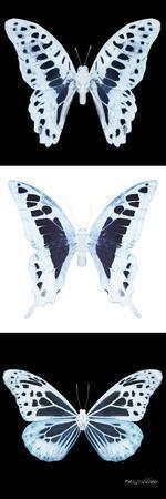 https://imgc.artprintimages.com/img/print/miss-butterfly-x-ray-pano-ii_u-l-q19nahk0.jpg?p=0