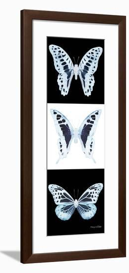 Miss Butterfly X-Ray Pano II-Philippe Hugonnard-Framed Photographic Print