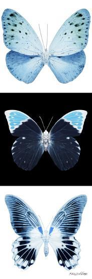 Miss Butterfly X-Ray Pano-Philippe Hugonnard-Photographic Print