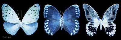 Miss Butterfly X-Ray Panoramic Black-Philippe Hugonnard-Photographic Print