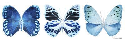 https://imgc.artprintimages.com/img/print/miss-butterfly-x-ray-panoramic-white-iii_u-l-q19nazb0.jpg?p=0