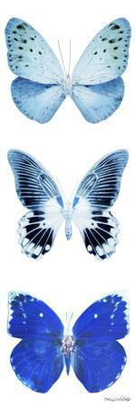 https://imgc.artprintimages.com/img/print/miss-butterfly-x-ray-white-pano-ii_u-l-q19nb220.jpg?p=0