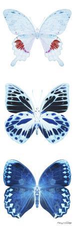 https://imgc.artprintimages.com/img/print/miss-butterfly-x-ray-white-pano_u-l-q19nawq0.jpg?p=0