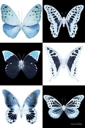 https://imgc.artprintimages.com/img/print/miss-butterfly-x-ray_u-l-q19nbmg0.jpg?p=0