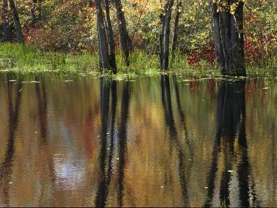 Missisquoi National Wildlife Refuge in Vermont-Medford Taylor-Photographic Print