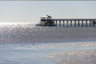 Mississippi, Bay St Louis. Shorebirds and Pier Seen from Marina-Trish Drury-Photographic Print