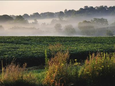 Mist Hangs over a Field of Soybeans Along Historic Maple Grove Road-Steve Raymer-Photographic Print