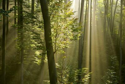 Mist in Forest Sunrays Breaking Through Autumn Forest--Photographic Print