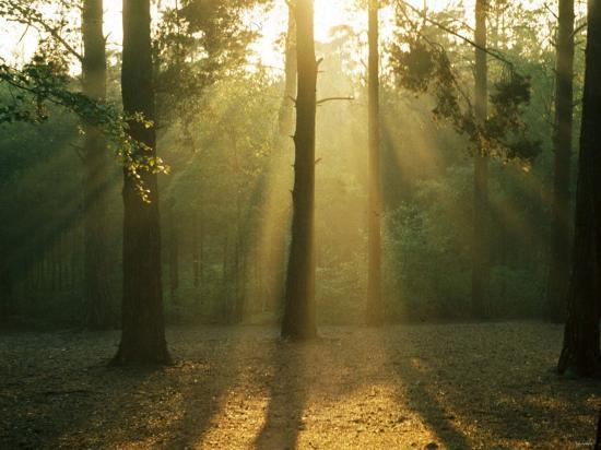 Mist Through the Trees--Photographic Print