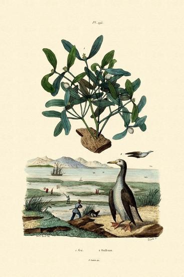 Mistletoe, 1833-39--Giclee Print