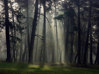Misty Autumn Forest with Pine Trees-Taras Lesiv-Photographic Print