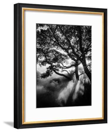 Misty Black-Design Fabrikken-Framed Photographic Print