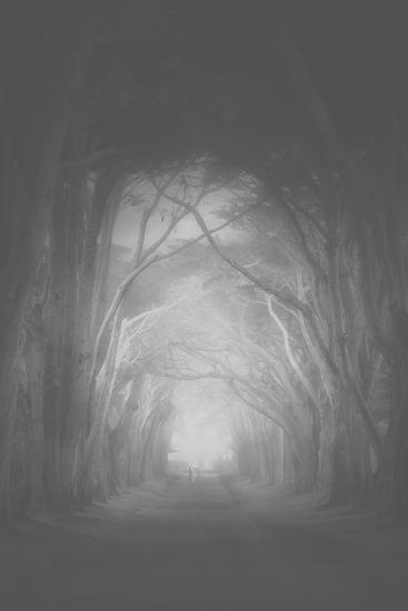 Misty Cypress Road Trees at Point Teyes National Seashore Black White-Vincent James-Photographic Print