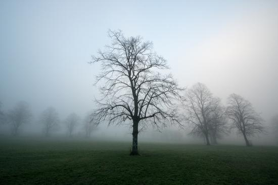 Misty Dawn, Victoria Park, Bristol, England, United Kingdom, Europe-Bill Ward-Photographic Print
