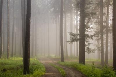 Misty forest in Wachau region of Austria-Charles Bowman-Photographic Print
