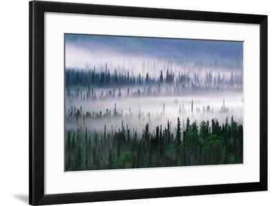Misty Forest Near Mount Brooks--Framed Photographic Print