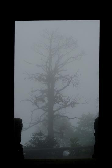 Misty Forest of Emei Shan-Tyrone Turner-Photographic Print