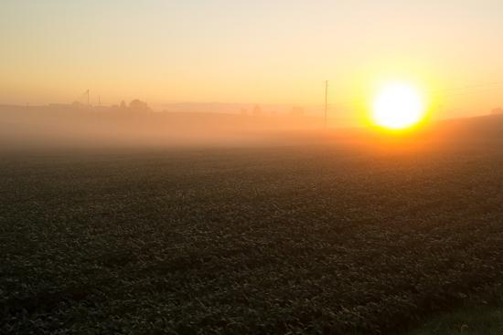 Misty Golden Sunrise over a Rural Cornfield-Stephen St^ John-Photographic Print