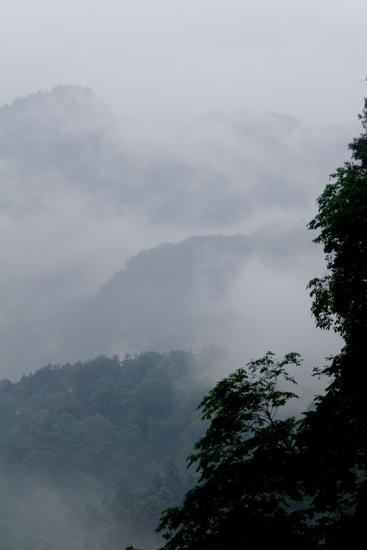 Misty Green Forest of Emei Shan-Tyrone Turner-Photographic Print