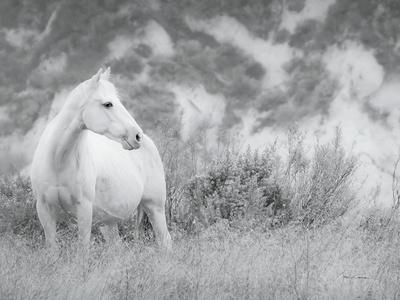 Misty Mare Crop-Lisa Cueman-Photographic Print