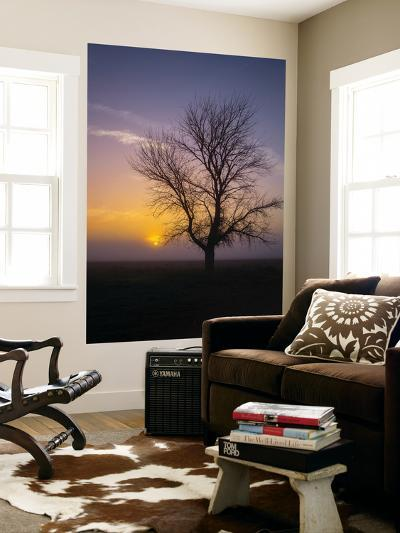 Misty Morning Sun and Tree Design II-Vincent James-Wall Mural