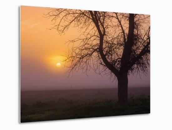 Misty Morning Sun and Tree Design III-Vincent James-Metal Print