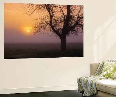 Misty Morning Sun and Tree Design III-Vincent James-Wall Mural