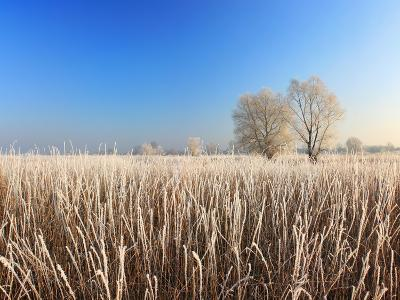 Misty Morning with Frost on the River in Early Spring-Anton Petrus-Photographic Print
