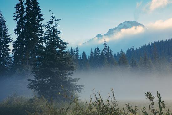 Misty Mount Hood Meadow in Spring, Oregon Wilderness-Vincent James-Photographic Print