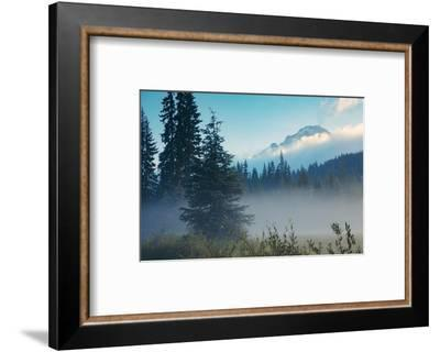 Misty Mount Hood Meadow in Spring, Oregon Wilderness-Vincent James-Framed Photographic Print