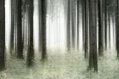 Misty Spruce Forest in Autumn, Abstract Study [M], Colour and Contrast Digitally Enhanced-Andreas Vitting-Photographic Print