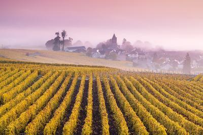 Misty Sunrise over Oger, Champagne Ardenne, France-Matteo Colombo-Photographic Print