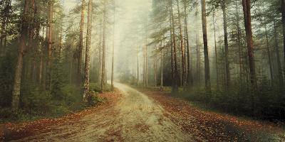 Misty Trail-Andreas Stridsberg-Giclee Print