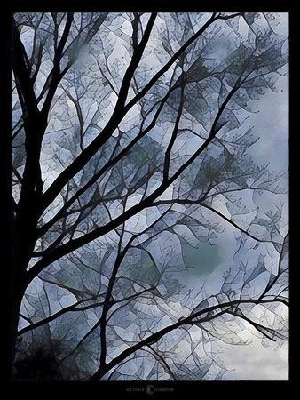 https://imgc.artprintimages.com/img/print/misty-tree_u-l-q1a77mp0.jpg?p=0