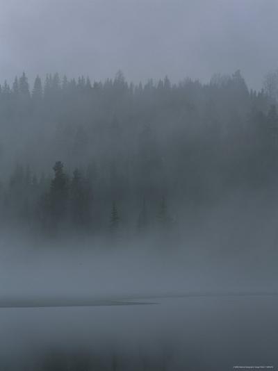 Misty View of Evergreen Forest and Water-Mattias Klum-Photographic Print