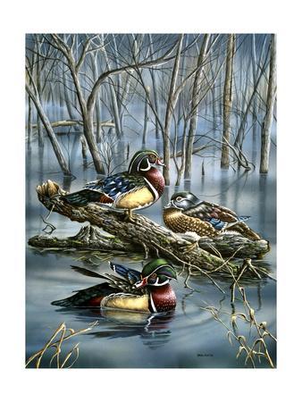 Misty Woodducks-Wanda Mumm-Giclee Print