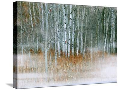 Misty-Tatiana Lopatina-Stretched Canvas Print